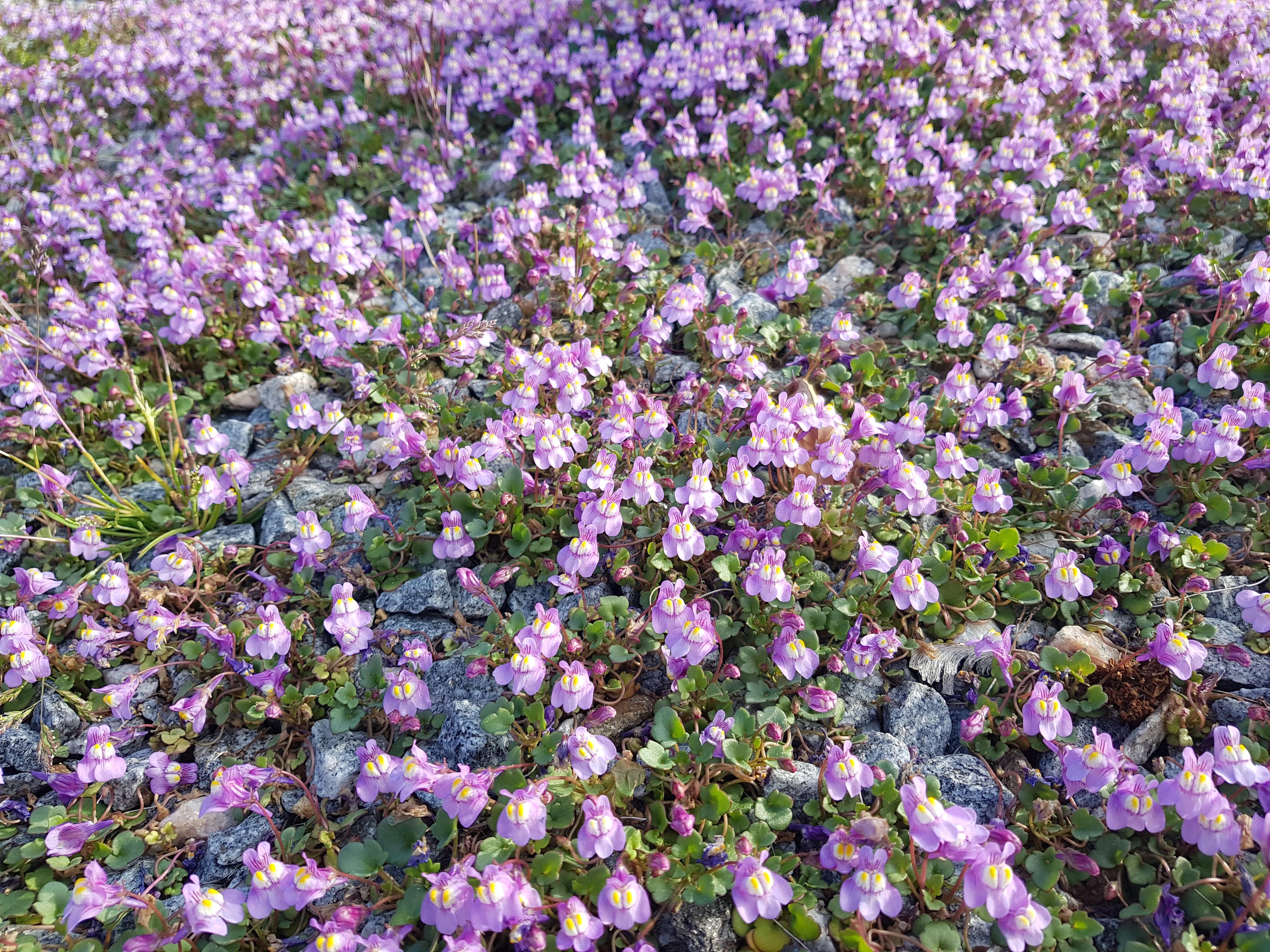 blomster2020.jpg